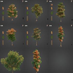 2021 PBR Silky Oak Collection - Grevillea Robusta 3D model