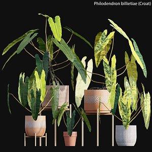 Philodendron billietiae 3D model