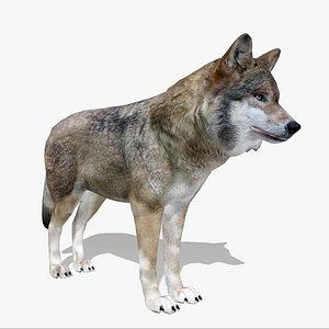 Gray wolf 3D model