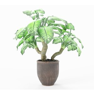 Plant in basket 3D model