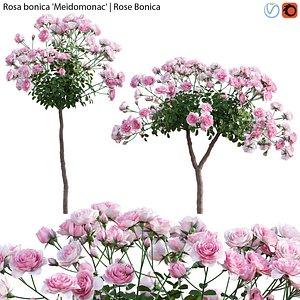 3D Rosa bonica Meidomonac - Rose flower 02