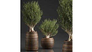 3D basket decorative trees