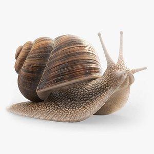 snail shell animal 3D model